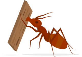 Termite eating a piece of wood