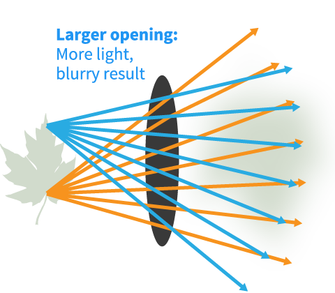 diagram of opening in the human eye